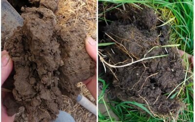 Realising the Benefits of Soil Health on Arable Farms