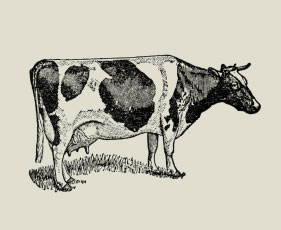 Farm Consultancy
