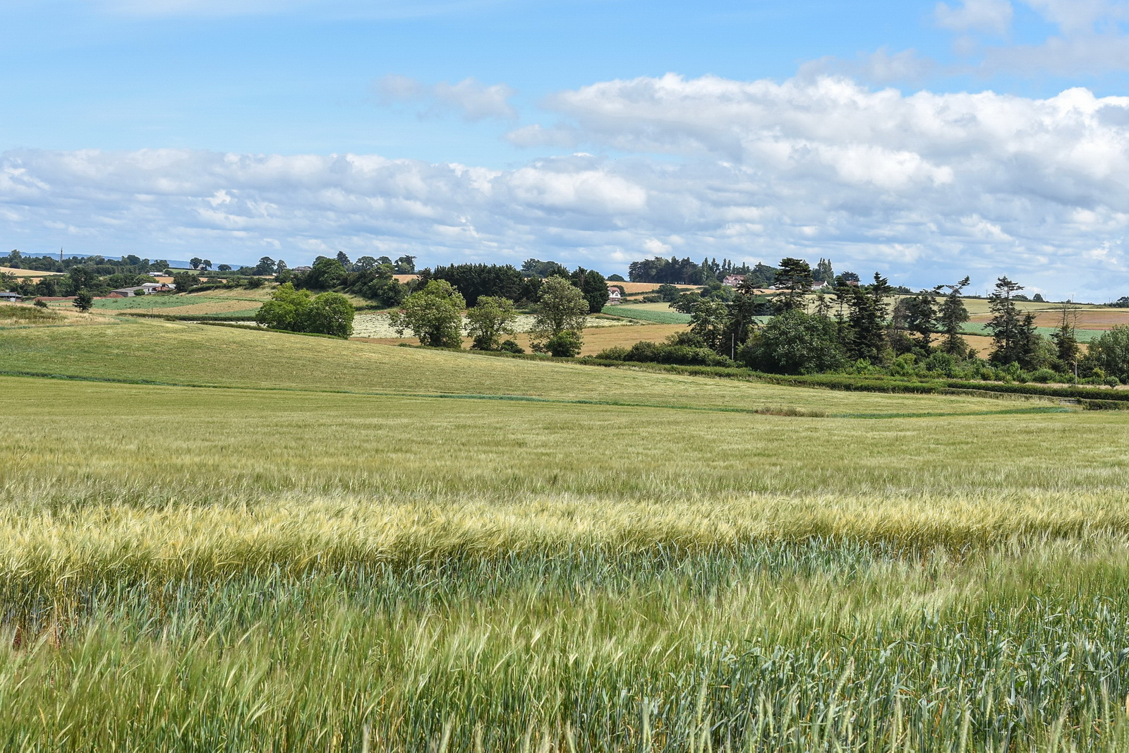 Arable Field, Regenerative Agriculture, Gothelney Farm, Soil Health