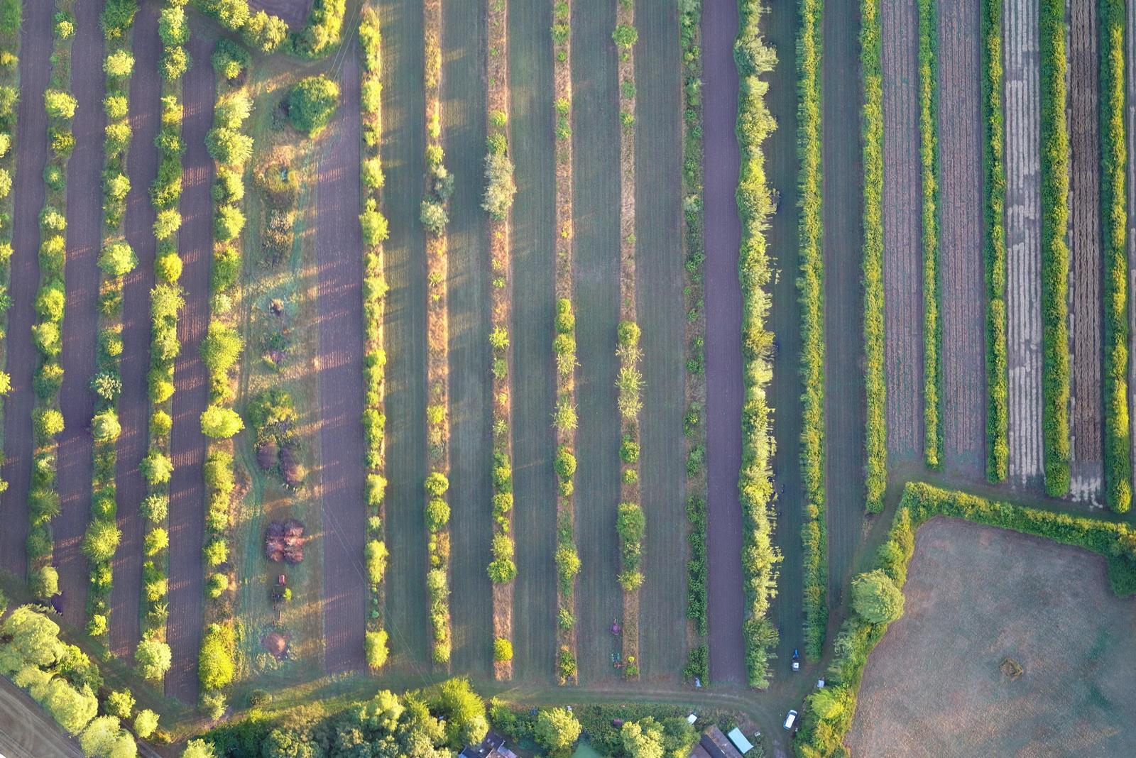 Whole Farm Planning Part 2, Agroforestry Course, Farming Course, Regenerative Agriculture Course, Wakelyns Farm